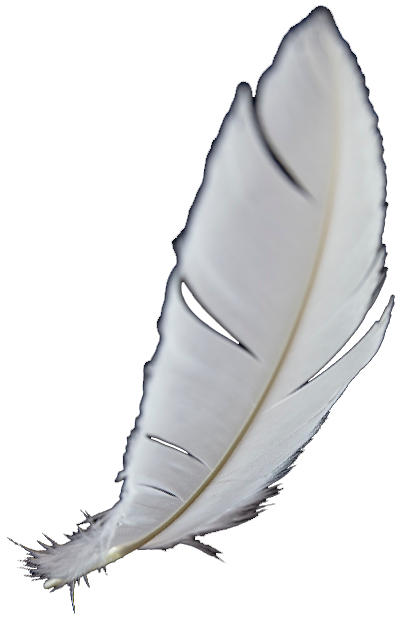 Floating white feather