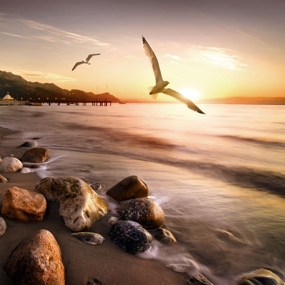 Seagulls flying in front of the sunset